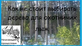 Как не стоит выбирать дерево для охотничьих лыж