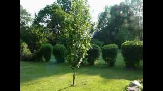 my garden and fruit trees and raspberry bushs at my home.