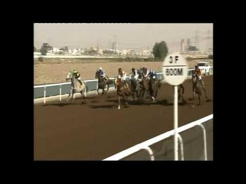 Al Shafar Investment Hcp. - 1400m -Salvadori (IRE)
