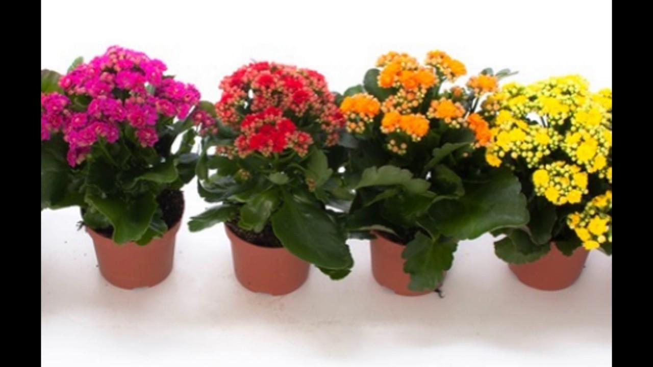 Tanaman Bunga Dalam Pot Kecil Youtube