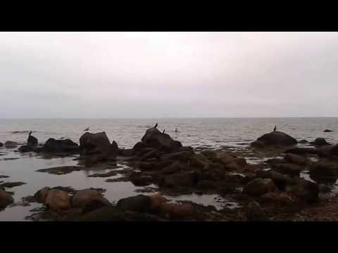 seabirds on rocks