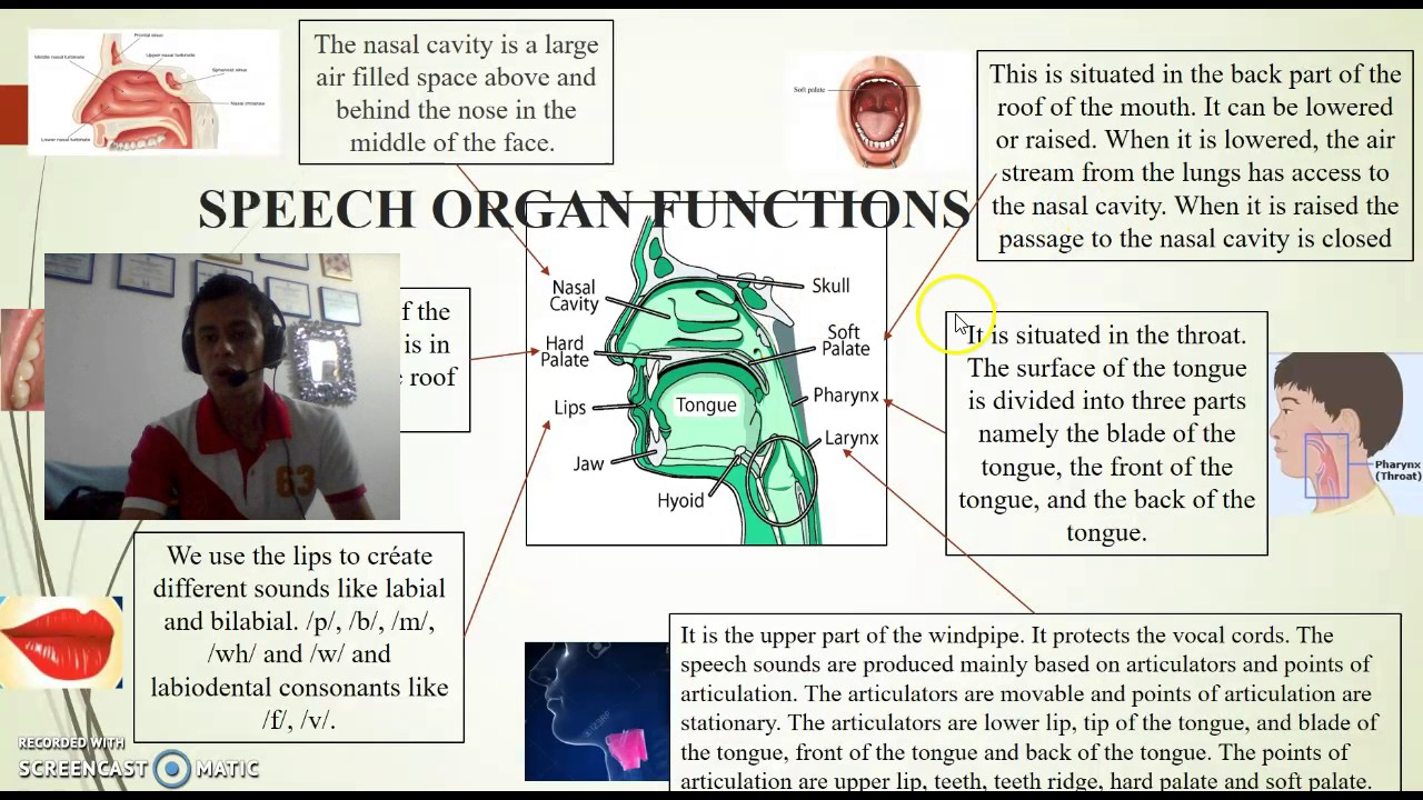 Speech organs and their functions - YouTube