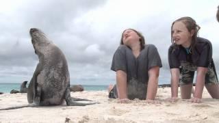 Beach Time with Galápagos Wildlife