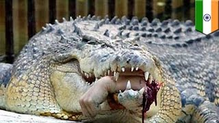 Crocodile attacks: Man's arm ripped off by crocodile, then he gets fined for trespassing