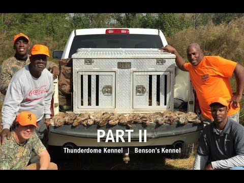Troy Swamp Rabbit Hunting   Part II   Benson's Kennel