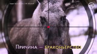 Лоси в Украине