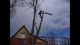 Удаление дерева частями(Промышленные альпинисты ( арбористы ) помогут безопасно спилить, удалить дерево любой сложности. Высокое,..., 2015-07-27T20:53:29.000Z)