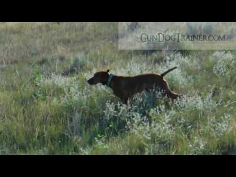Storm Jasper divided sharptail grouse find