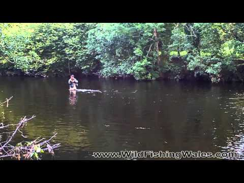 Autumn Dry-fly Fishing River Irfon, Wales