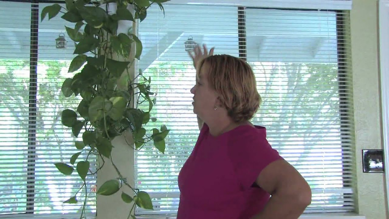 Plant Care Tips How To Grow Hanging Plants Indoors Youtube