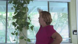 Plant Care Tips : How To Grow Hanging Plants Indoors