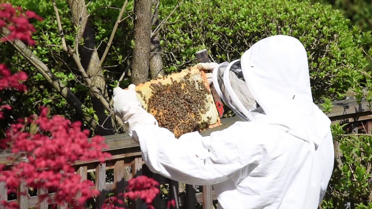 Spring Maintenance Hive Maintenance