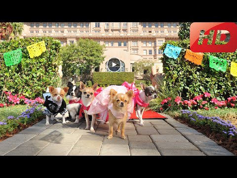 The Beverly Hills Chihuahua 2 - Beverly Hills Chihuahua 2 - 2011