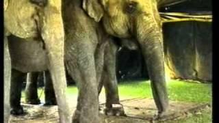 Сценакардия - Перед животными мы все виноваты.