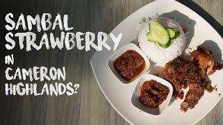 travel malaysia sambal strawberry in cameron highlands ep 2