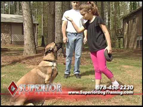 dog-training-atlanta-and-metro-areas