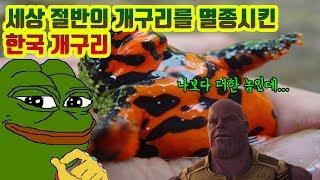 전세계 절반의 개구리를 멸종시킨 녀석이 우리나라에 있다고?? 직접 찾아봤다!!!
