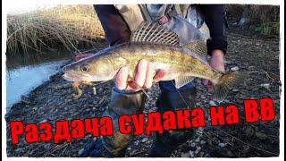 Раздача судака на Волгоградском Водохранилище