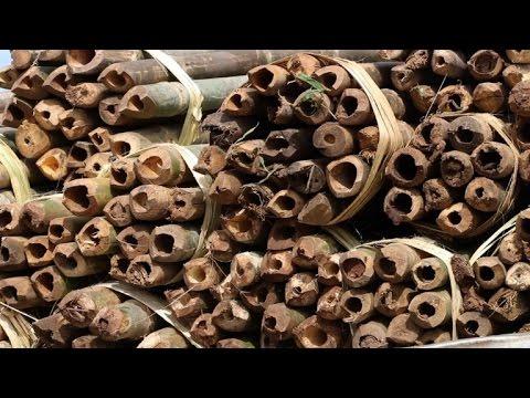 Mozambique lucha contra el comercio ilegal de madera