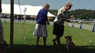 Bond And Rory - Winners Dog Class - Westchester Kc - September 8, 2013