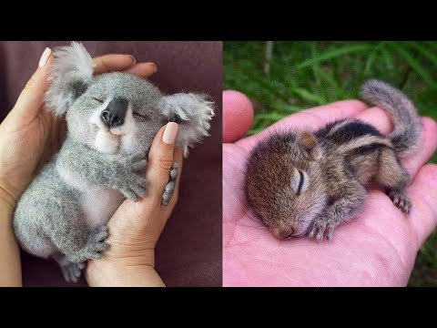 Cute baby animals Videos Compilation cute moment of the animals  Cutest Animals #9