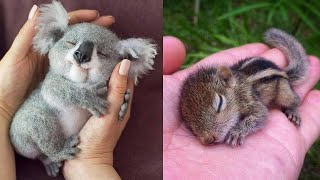 Cute baby animals Videos Compilation cute moment of the animals - Cutest Animals #9