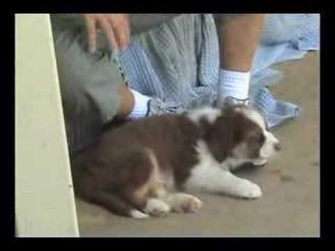 Don't Mess With A Australian Shepherd