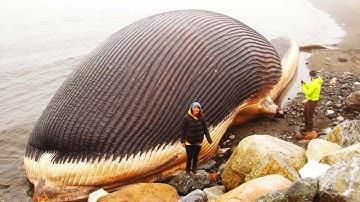 Das größte Tier auf unserem Planeten!