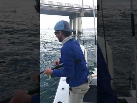 Hooked Giant Fish on a Bridge #Shorts