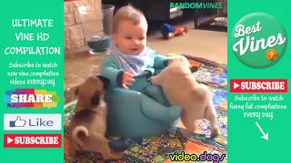 Funny Video Dogs Compilations 2016 #6