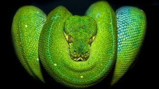 Top 10 Venomous Snakes in the World
