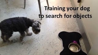 How To Train Your Dog To Search For Objects - The Pooch Coach