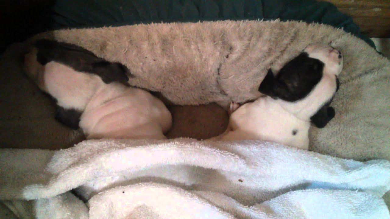 two little brother and sister sleep together so cu - youtube