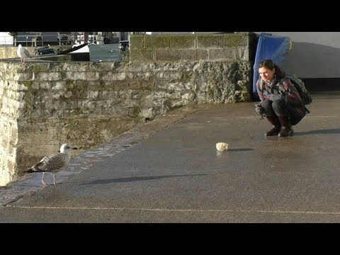 Andi and Kenny - Staring at Seagulls Can Stop Them Stealing Food, Research Shows