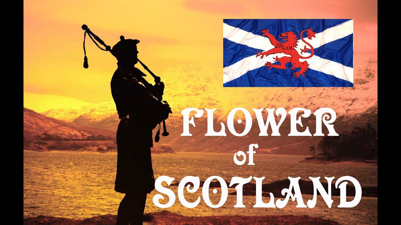 💥Flower of Scotland 💥Lone Piper Album💥 - YouTube