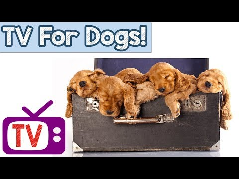 Dog TV - Relax My Dog calming Music - Tv For Dogs -  nature footage and sounds