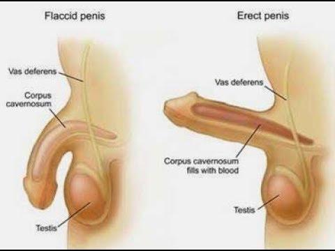 Ejercicios para ereccion pene