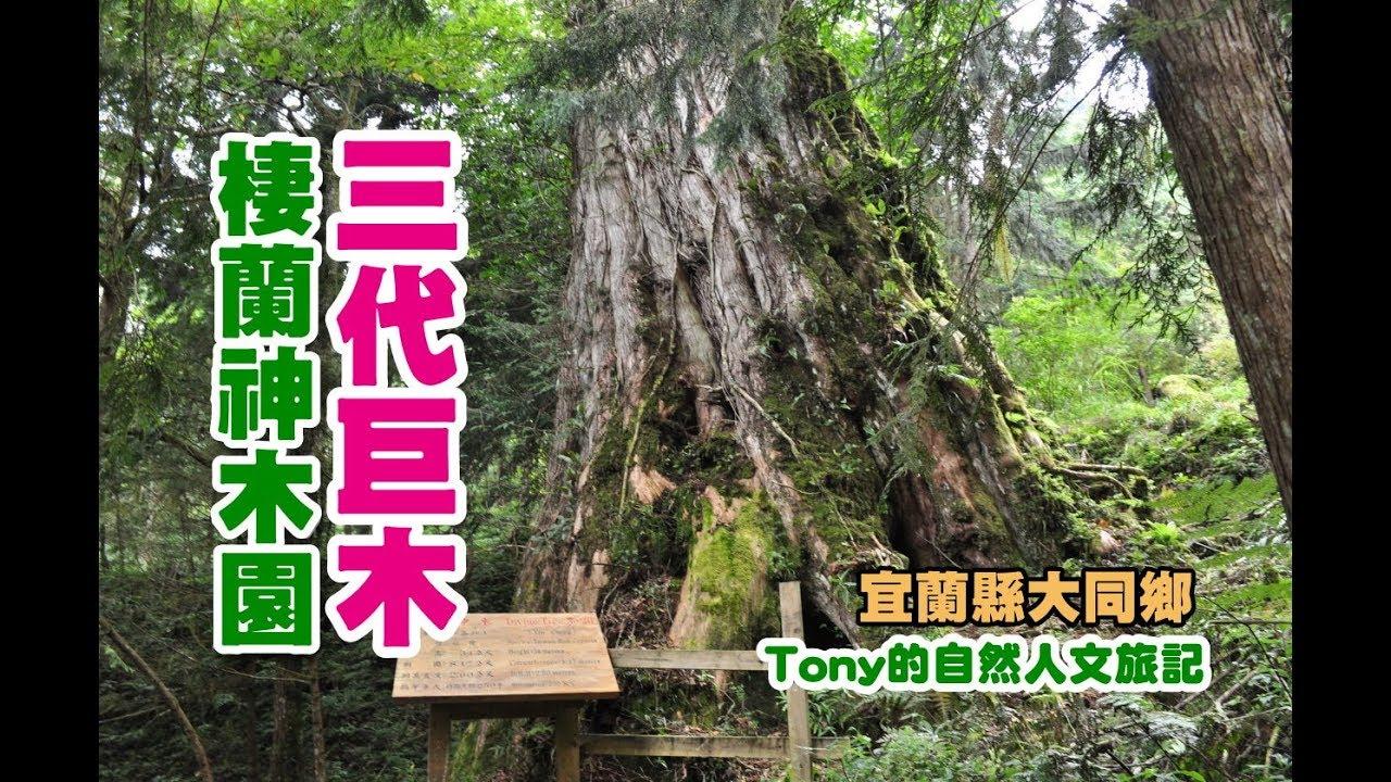 棲蘭神木園三代木巨木 - YouTube