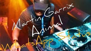 WhataApp Status | Martin Garrix   Animals