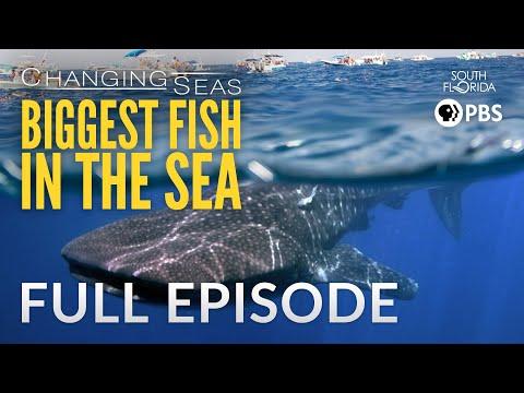 Biggest Fish In The Sea - Full Episode