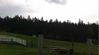 はじめて動画公開します。 羊かわいいですよ。