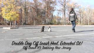 Shih-tzu/maltese Both Off Leash Heeling Together New Jersey K9 Training