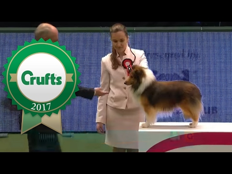 International Junior Handling - Part 1/4 | Crufts 2017