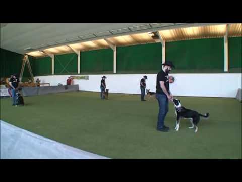 Erste Deutsche DogDance Men Group