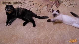 Танцор Котёнок Гарольд ✦ Приколы Про Кошек ✦ Funny cats ✦ Kitten dancer ✦ LUCKY