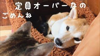 わざわざ狭い所でくっついて寝る犬と猫 sorry, my house is full thumbnail