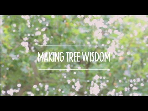 Making Tree Wisdom - Tutorial 3: Using After Effects with VideoScribe