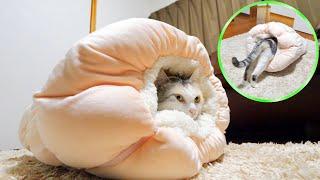 寒くなって来たのでネコ吉にペットベッドクロワッサンをプレゼントしました