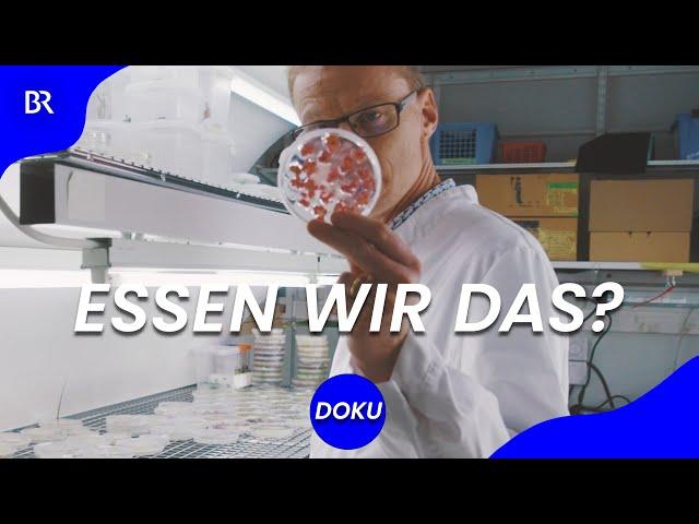 Wie wir in Zukunft essen - Lebensmittel aus dem Bioreaktor statt vom Acker? | beta stories | BR