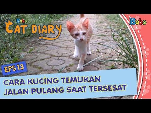 diary-kucing-eps-13---cara-kucing-temukan-jalan-pulang-saat-tersesat